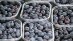 Agroexportaciones del Perú suman US$ 516 millones en enero y llegaron a 98 países - Noticias de exportacion de cafe