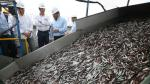 Sociedad Nacional de Pesquería lanza proyecto de mejoramiento para pesquería peruana de anchoveta - Noticias de fip