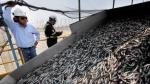 SNP: Pesqueras peruanas no esperan gran impacto de El Niño en la anchoveta - Noticias de elena conterno