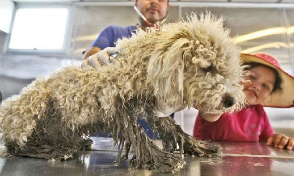Lima: darán en adopción 30 mascotas rescatadas de los huaicos - Noticias de empresas