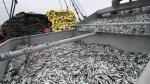 Producción del sector pesquero creció 37.3% en marzo por décimo mes consecutivo - Noticias de industria extractiva