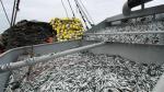 Promueven ingreso de pescados azules a la gastronomía peruana - Noticias de elena conterno