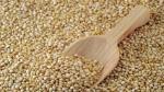 Productores de quinua orgánica de La Libertad iniciarán envíos a Australia y Nueva Zelanda - Noticias de sierra exportadora