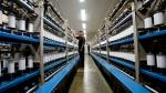 Rey planea ampliar capacidad de su fábrica para aumentar exportaciones a tres países - Noticias de samuel gleiser