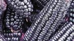 Maíz morado de Cajamarca, un producto que es más pedido en EE.UU. y Europa - Noticias de sierra exportadora