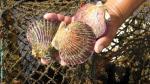 Produce otorgará más recursos para impulsar exportación de conchas de abanico - Noticias de ley de institutos tecnológicos