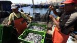 Pesca de anchoveta crecería 70% en el 2017 y sería la mejor en cuatro años, proyecta el Scotiabank - Noticias de imarpe