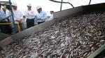 Produce: Pesca creció 52% en junio por un mayor desembarque de anchoveta y mayores días de pesca - Noticias de recursos humanos