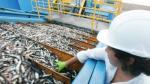 Anchoveta: Se pescó el 85.8% de la cuota asignada a zona norte y centro en la primera temporada - Noticias de imarpe