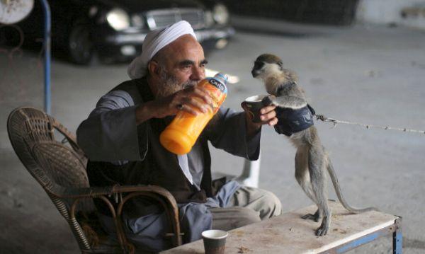 Palestino comparte jugo de naranja con su mono - Noticias de