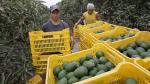 ¿Cuál es el aporte de la tecnología al desarrollo agrícola? - Noticias de senasa