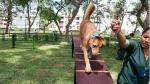 San Isidro: Establecen multas de S/ 4,050 por ladridos de perros - Noticias de horarios