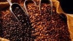 Insectos y roya presagian más problemas para suministro de café - Noticias de bienal