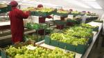 Agroexportaciones del Perú llegan a 135 países y envíos a mercados de Asia crecen en 47% - Noticias de balanza comercial
