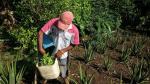 EE.UU. cuestiona plan antidrogas de Colombia por involucrar a FARC - Noticias de farc
